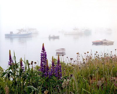 Lupines and Boats in the Fog by Gary Thompson