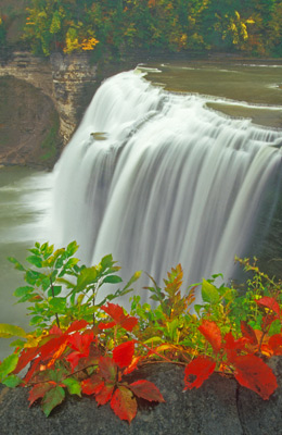 Virginia Creeper at the Middle Falls by Gary Thompson